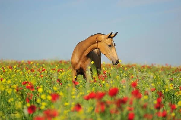Horse Love Photograph - Uzgirl by Artur Baboev