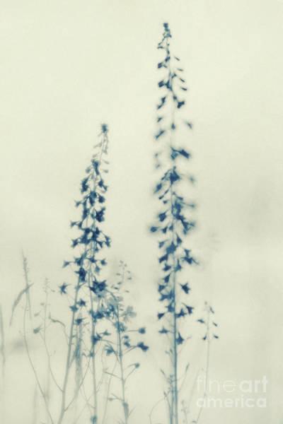 Wall Art - Photograph - Wild Flowers by Priska Wettstein