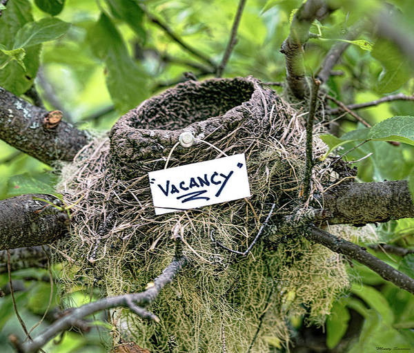 Empty Nest Wall Art - Photograph - Vacancy  by Marty Saccone