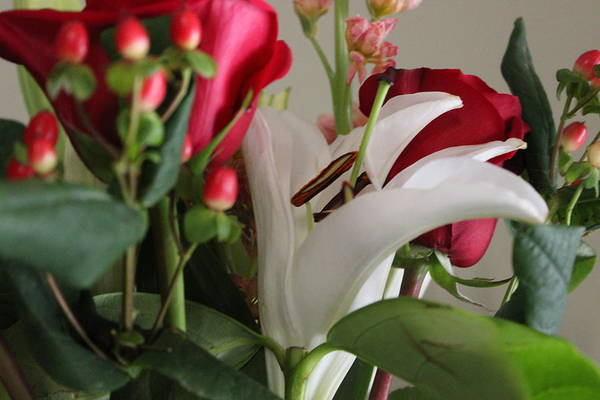 Wall Art - Photograph - Valentine Bouquet by Gayle Miller