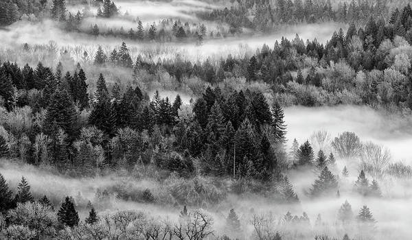 Photograph - Valley Fog by Wes and Dotty Weber
