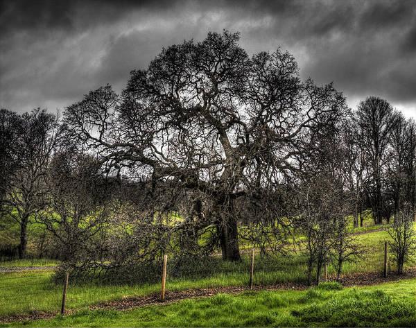 Photograph - Valley Oak by Lee Santa