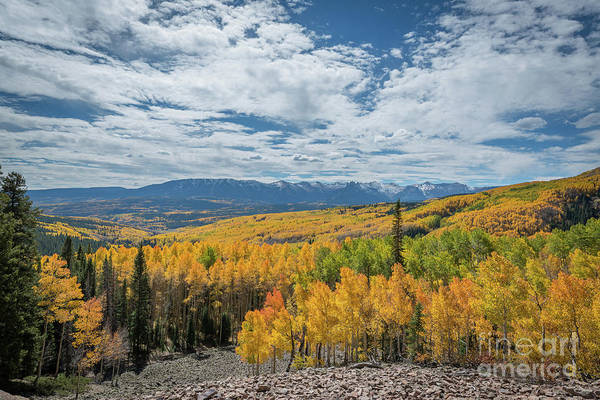 Photograph - Valley Of Color  by Michael Ver Sprill