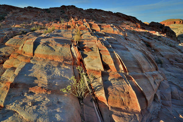 Photograph - Valley Of Fire In Evening Light by Ray Mathis