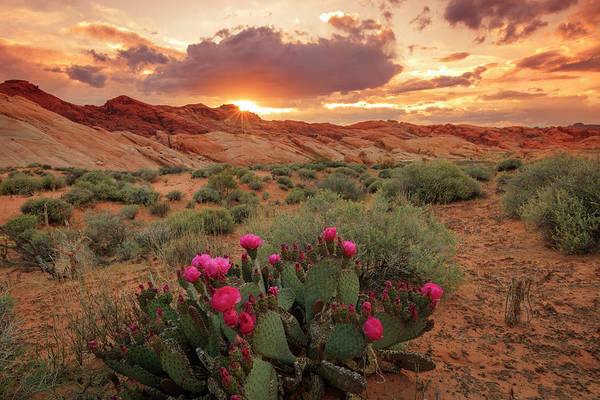 Photograph - Valley Of Fire by Johnny Adolphson