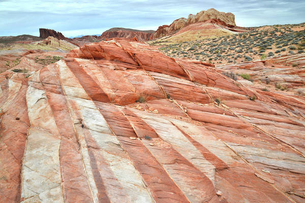 Photograph - Valley Of Fire Stripes Of Color by Ray Mathis