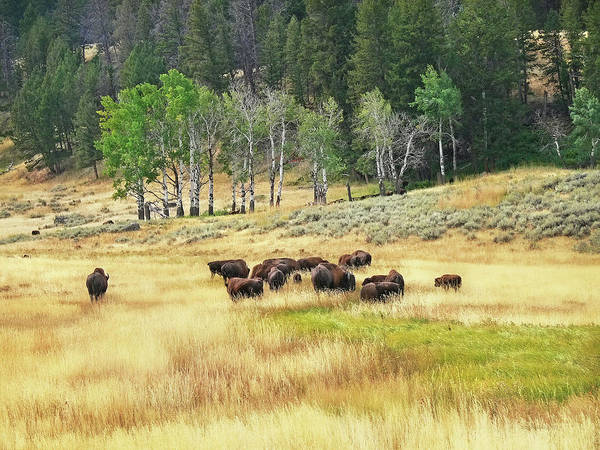 Wall Art - Photograph - Valley Of The Buffaloes by Jennie Marie Schell