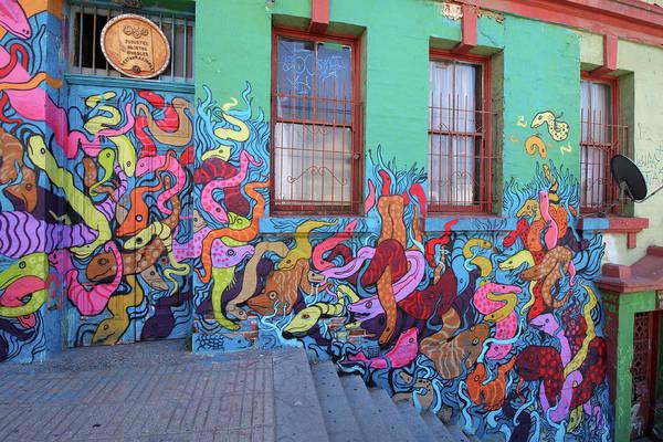 Photograph - Serpents On The Wall by Aidan Moran