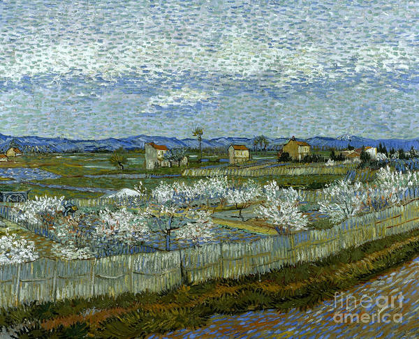 Photograph - Van Gogh: Peach Tree, 1889 by Granger