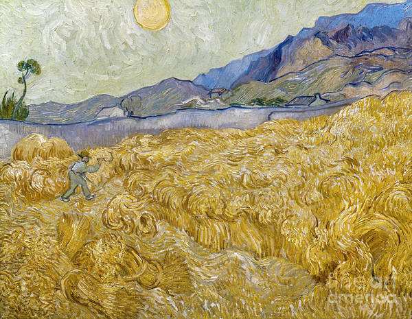 Photograph - Van Gogh: Wheatfield, 1889 by Granger