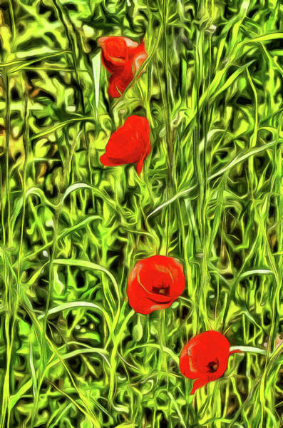 Wall Art - Photograph - Van Gogh Poppys by David Pyatt
