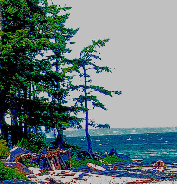 Photograph - Vancouver Island Driftwood by Joseph Coulombe