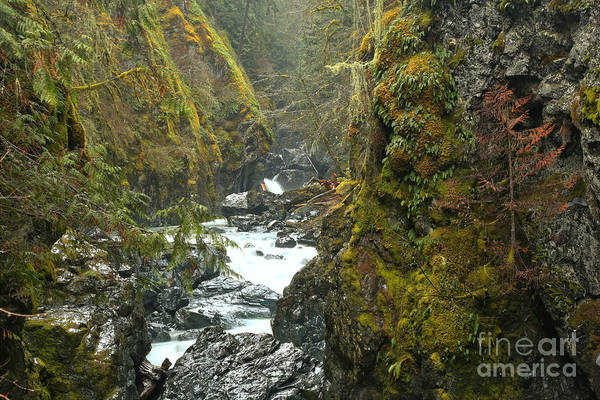 Photograph - Vancouver Island Lush Canyon by Adam Jewell