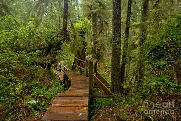 Photograph - Vancouver Island Rainforest Boardwalk by Adam Jewell