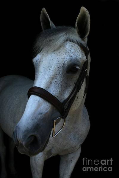 Photograph - Vanessa-ireland24 by Life With Horses