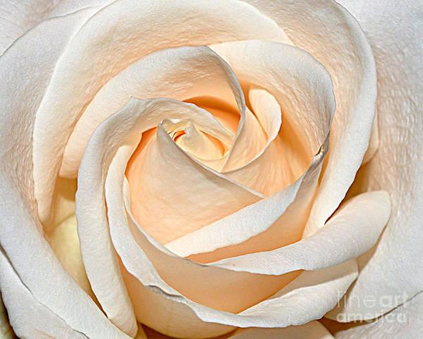 Diane Berry Wall Art - Photograph - Vanilla Cream by Diane E Berry