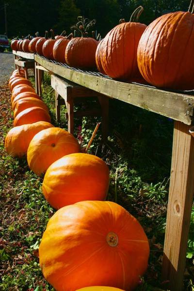 Photograph - Vanishing Point Pumpkins by Polly Castor