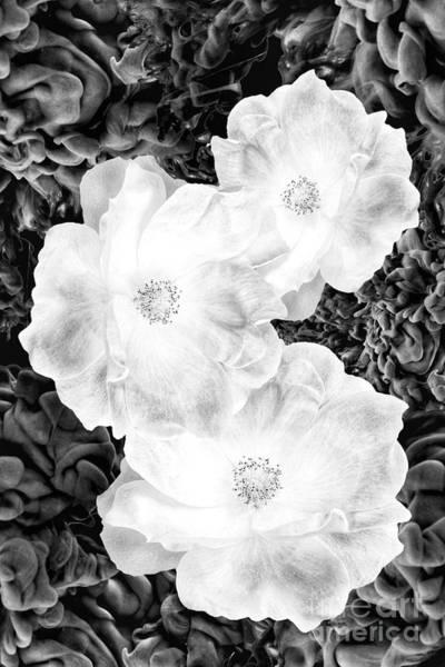 Photograph - Vapors by Rachel Hannah