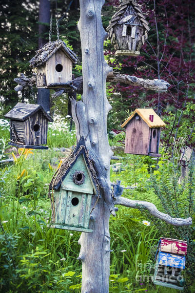 Photograph - Variety Of Birdhouses Hanging On Tree In Garden by Bryan Mullennix