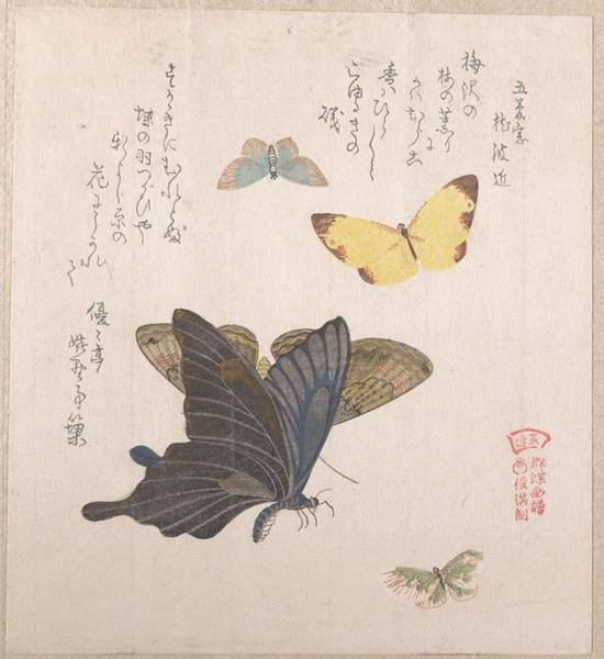 Wall Art - Painting - Various Moths And Butterflies , Kubo Shunman Japanese, 1757-1820 by Kubo Shunman