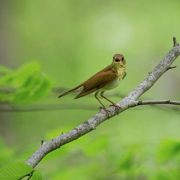 Photograph - Veery Square by Bill Wakeley