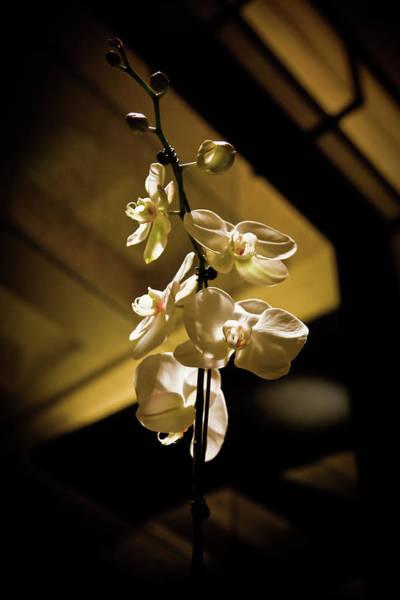 Wall Art - Photograph - Vegas Orchids by Patrick  Flynn