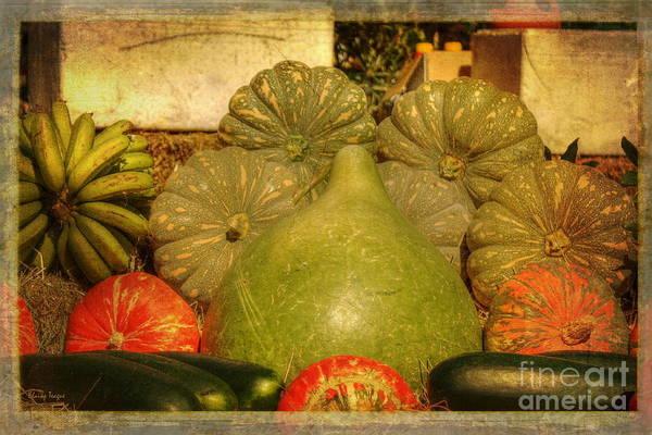 Photograph - Vegetable Harvest by Elaine Teague