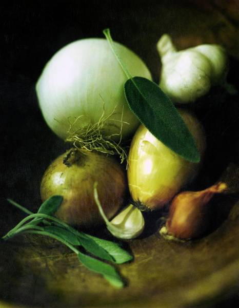 Drawing - Vegetables For Thanksgiving Stuffing by Romulo Yanes