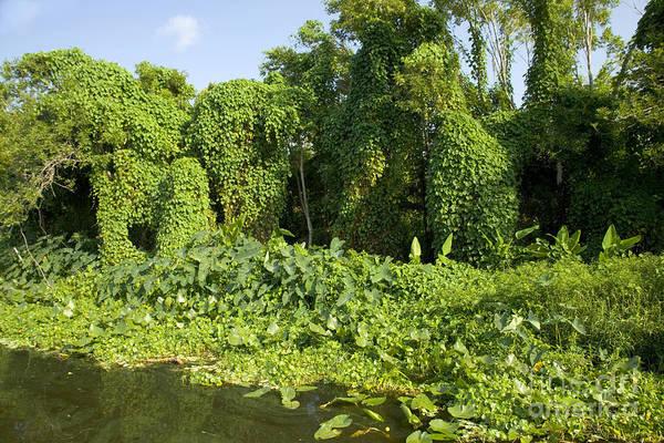 Photograph - Vegetation Along The St. Johns River by Inga Spence