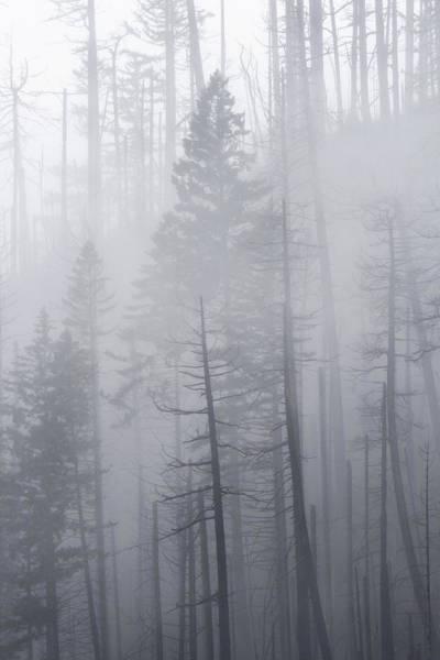 Photograph - Veiled In Mist by Dustin LeFevre