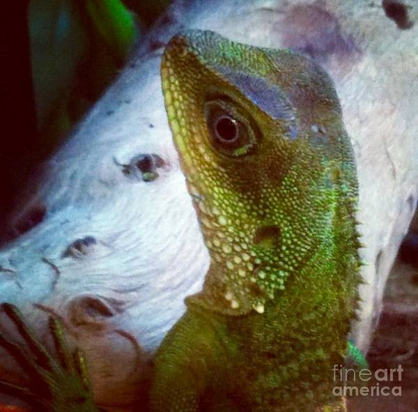 Photograph - Velociraptor by Denise Railey