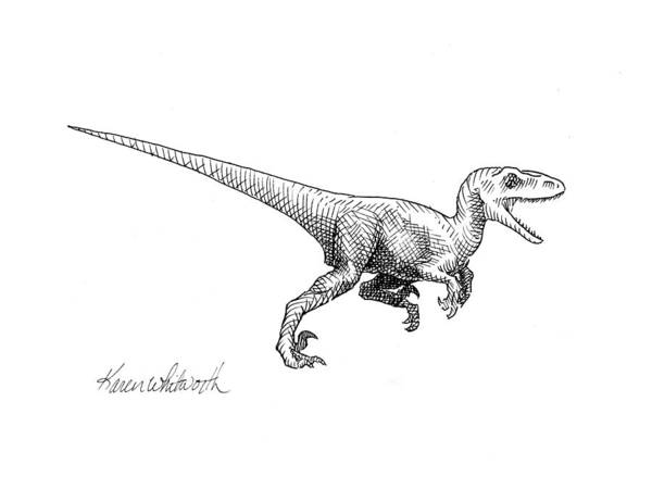 White Background Drawing - Velociraptor - Jurassic Dinosaur Science Illustration Black And White Contemporary Art Ink Drawing by Karen Whitworth