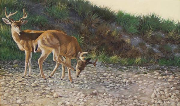 Black Buck Painting - Velvet Bucks by Shari Erickson