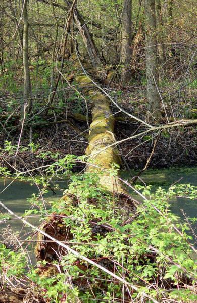 Photograph - Velvet Footbridge by Wild Thing