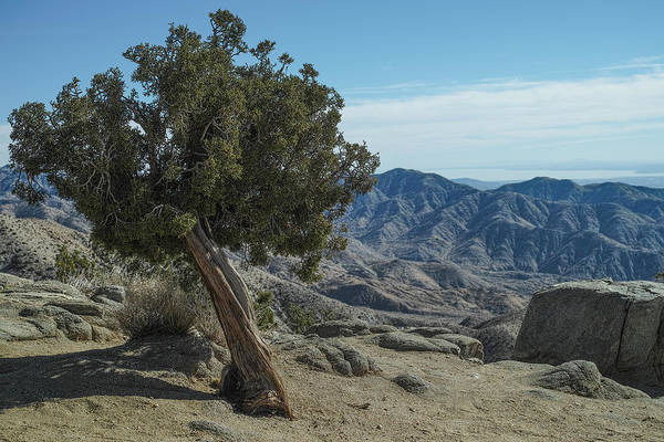 Photograph - Venerable Tree by Peter Dyke