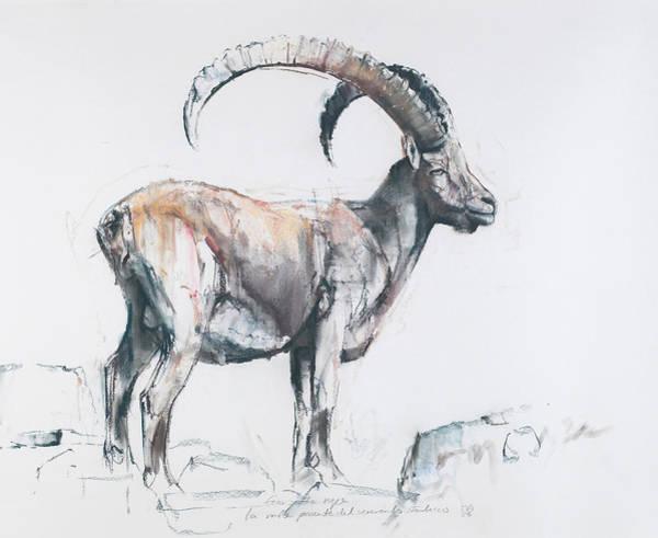 Ibex Wall Art - Painting - Venerando Stambecco by Mark Adlington