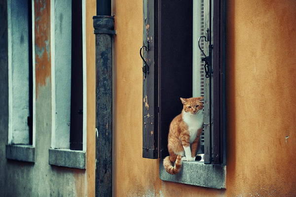 Photograph - Venice Cat by Songquan Deng