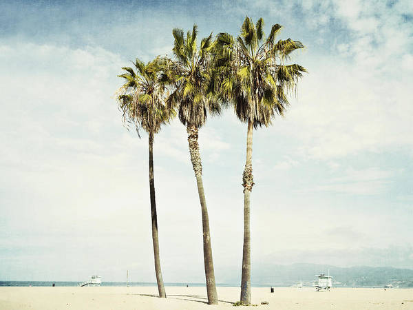 Palm Tree Wall Art - Photograph - Venice Palms  by Bree Madden