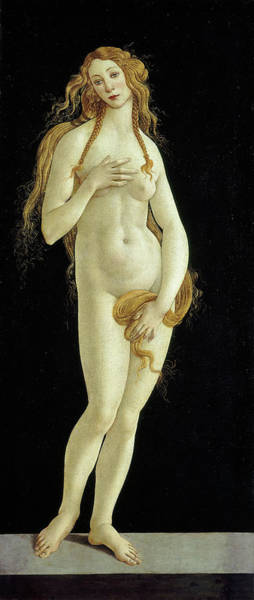 Sandro Botticelli Painting - Venus by Sandro Botticelli