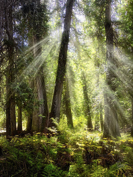 Photograph - Verdant Forest by Endre Balogh