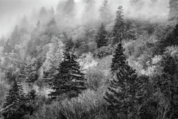 Wall Art - Photograph - Verdant Forest In The Great Smoky Mountains In Black And White by Kay Brewer