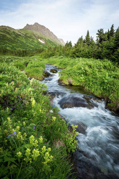Photograph - Verdant Mountain Stream by Tim Newton