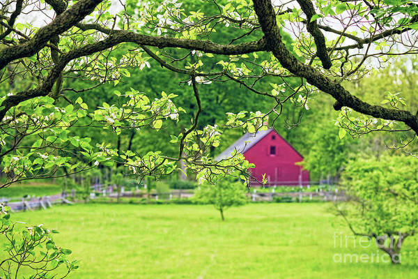 Wall Art - Photograph - Verdant Spring In New Jersey by George Oze