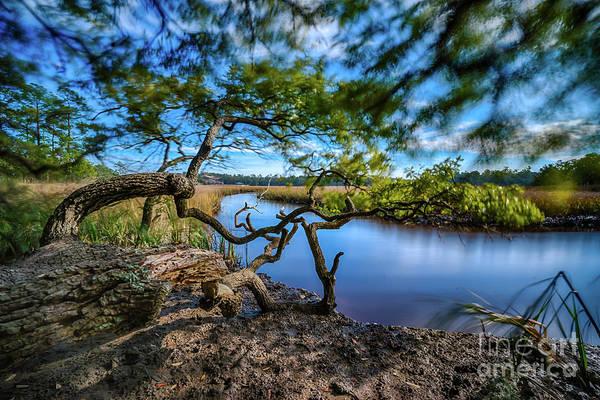 Photograph - Vereen Memorial Gardens Little River, South Carolina by David Smith