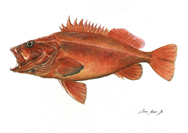 Saltwater Wall Art - Painting - Vermilion Rockfish by Juan Bosco