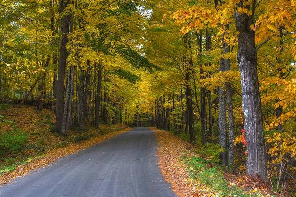 Photograph - Vermont Fall Tree Lined Street Woodstock Vermont by Toby McGuire