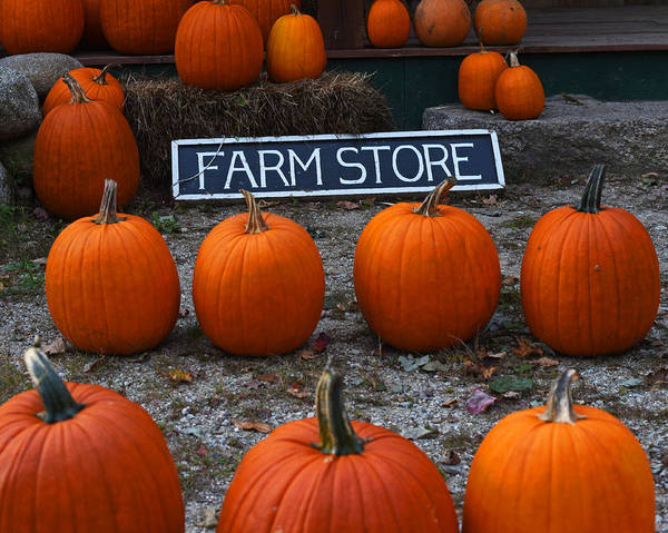 Photograph - Vermont Farm Store Sign Pumpkins by Toby McGuire