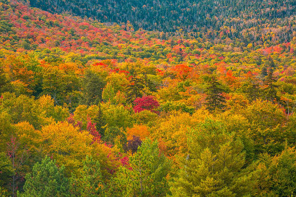 Waitsfield Photograph - Vermont Foliage by Alex Zabo