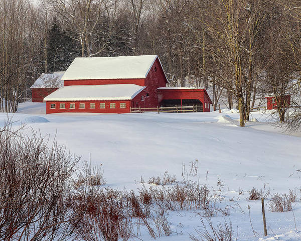 Photograph - Vermont Red by Rod Best