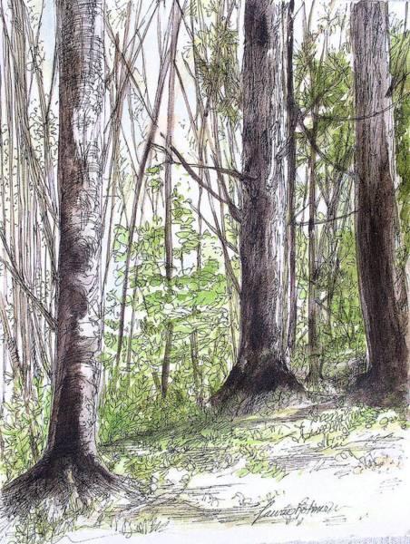 Vermont Woods Art Print